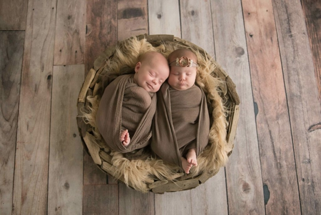 twin newborn photographer albany ny